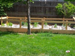 Planting day