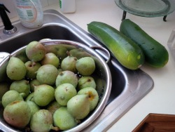 Cucumbers from Danielle. Early Pear harvest